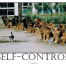 Self Control Dogs